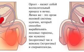 Орхит лечение антибиотиками название