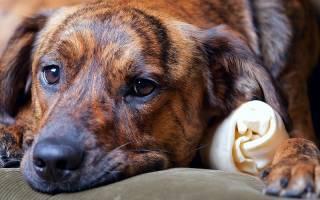 Антибиотики при панкреатите у собак
