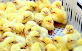 Антибиотик для цыплят бройлеров название
