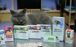 Какие антибиотики можно давать кошкам