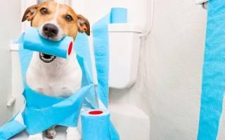 Левомицетин можно ли давать собакам
