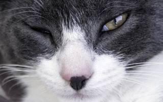 Можно ли капать левомицетин кошке в глаза