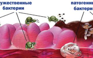 Для кишечника после антибиотиков препараты