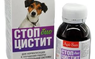 Антибиотики при цистите у собак